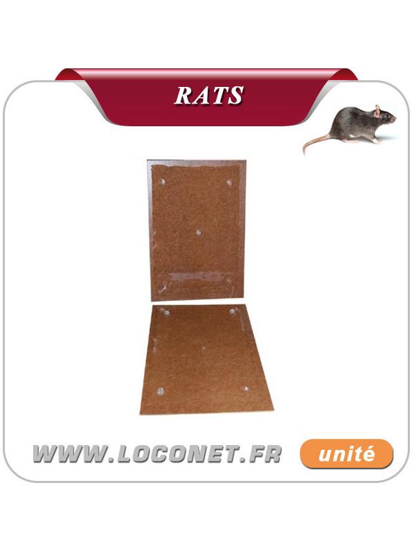 Plaquettes de glue aromatisé pour rats - RATUCLAC