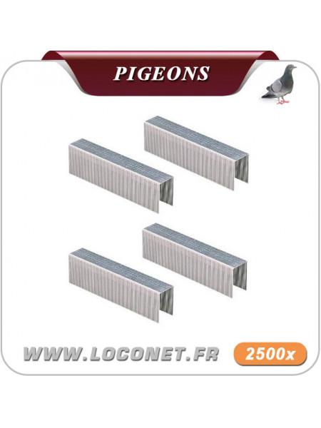 Agrafes pour filets anti pigeon et volatiles - ECOPIC