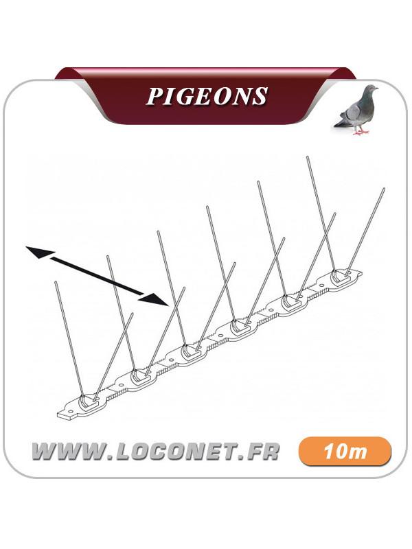Piques à pigeon - ASTUPIC 10 mètres