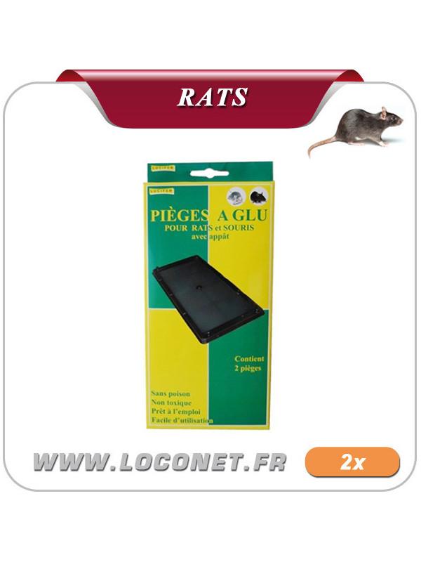 Plaquettes de glue pour rats GLUE TRAP LUCIFER