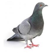Répulsif pigeons et oiseaux et protection anti oiseaux