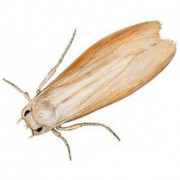 Se debarasser des mites : produits contre mites alimentaires et textiles