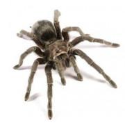 Eloigner araignées : produits anti araignées
