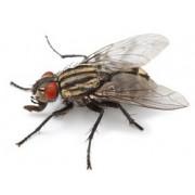 Eloigner mouche : produits pour éloigner mouches