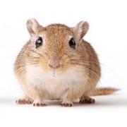 Anti souris : Produits anti souris