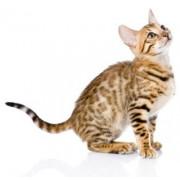 Produits anti chats - Répulsifs anti chats