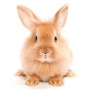 Repulsif a lapin - Granulés contre lapin